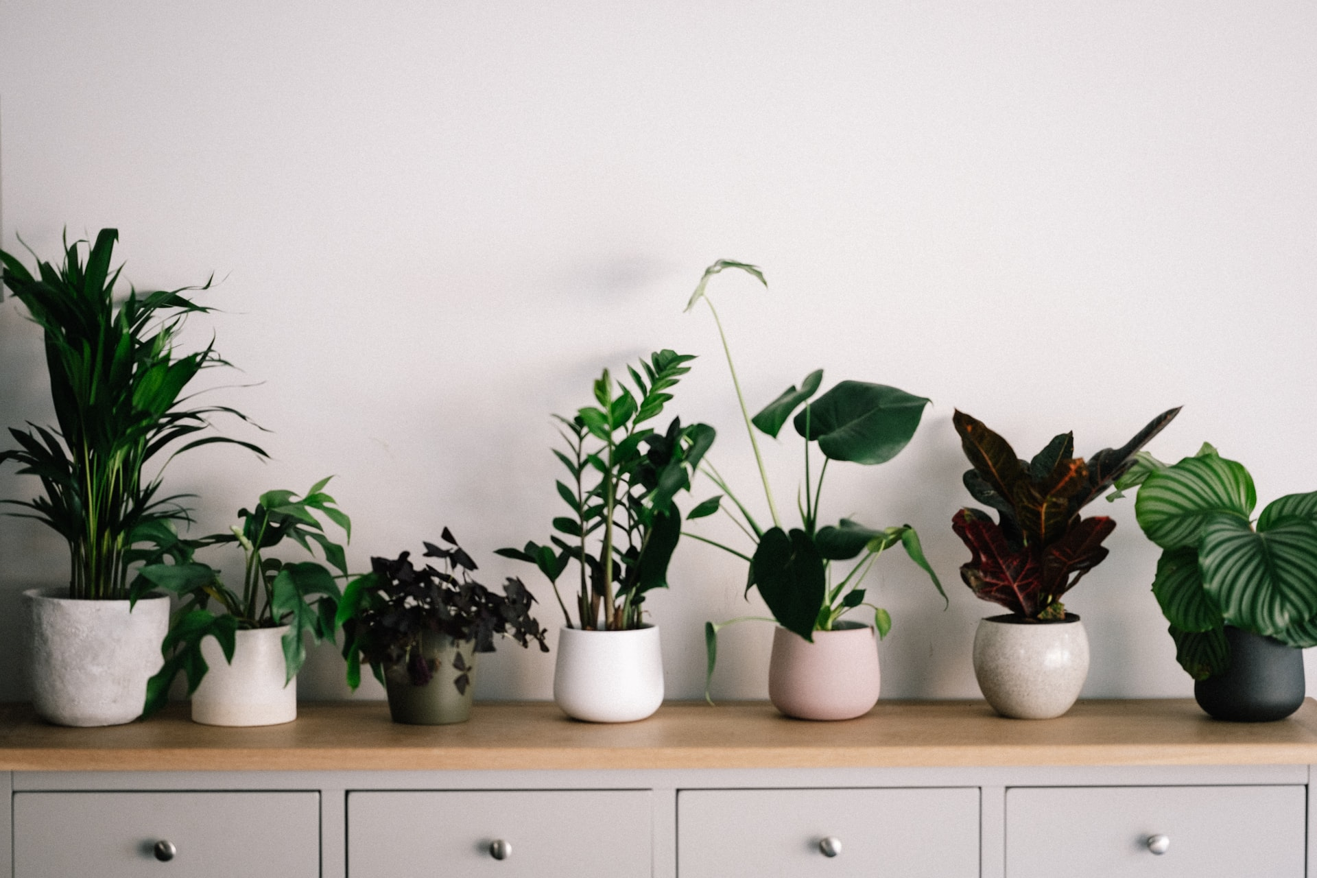 How Having Plants At Home Can Make It More Appealing And Attractive